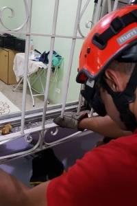 Bombeiros resgatam cachorro grade