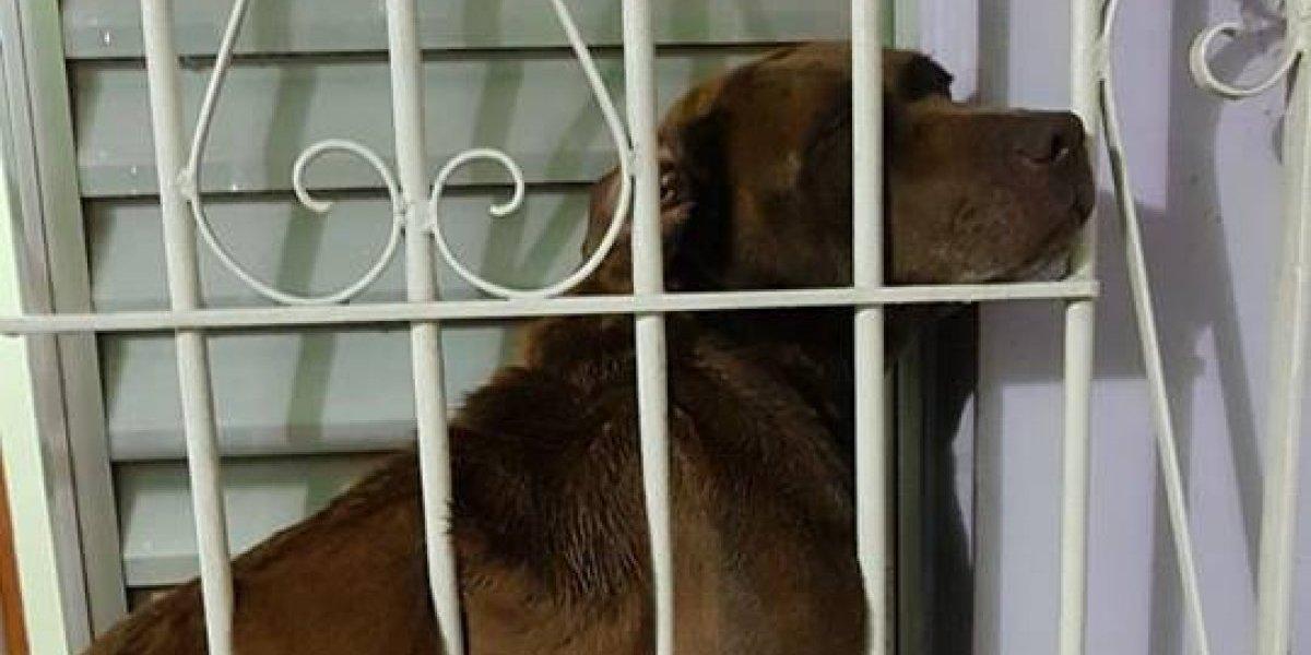 Cachorro assustado com barulho de fogos fica preso em grade e é resgatado