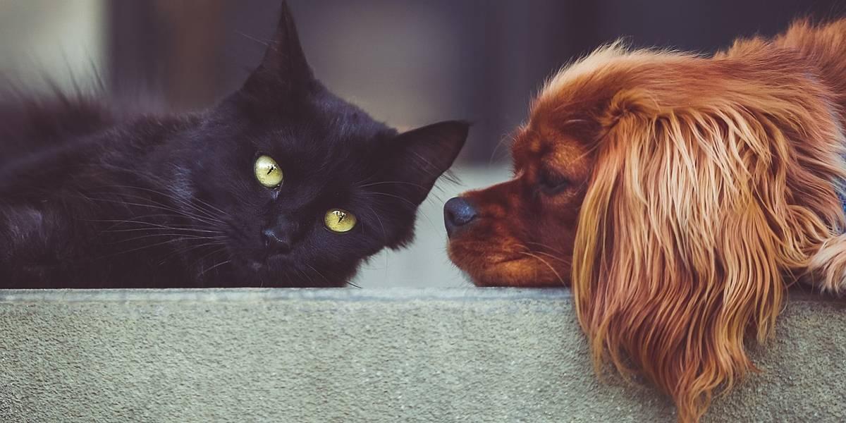 Projeto quer criar farmácias populares para pets em São Paulo