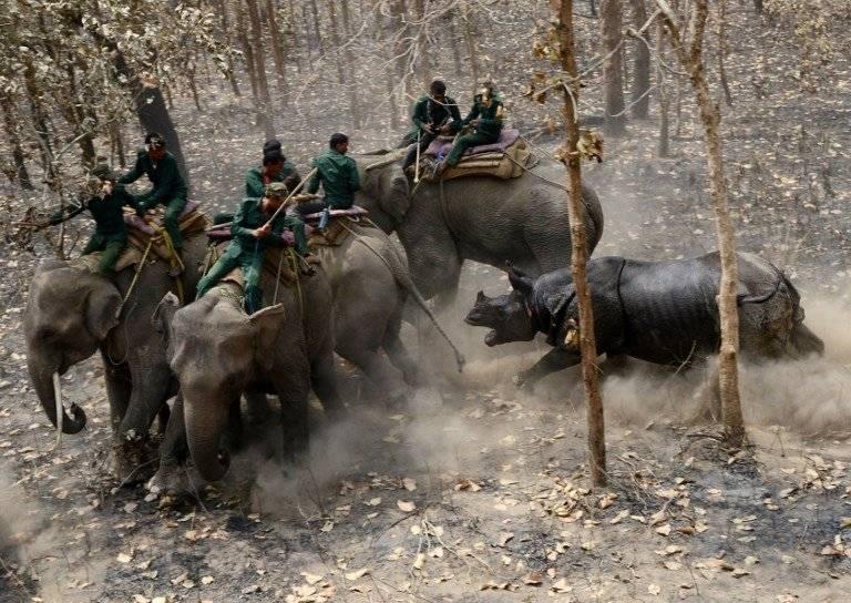 Rinoceronte liberado en Nepal
