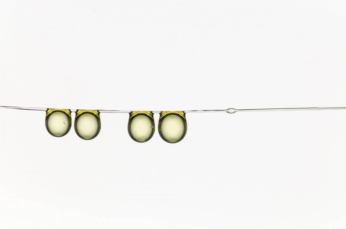 """Microimagens, por Hervé Elettro. A tensão superficial permite que as gotinhas """"engulam"""" qualquer fibra solta sob compressão, fortalecendo o fio onde se encontram. Um primeiro passo para entender este mecanismo foi usar um sistema modelo para a captura de seda: gotas sobre uma fina e macia fibra. Assim nasceu a família da gota de azeite de oliva. Peter Convey/Royal Society Publishing Photography Competition"""