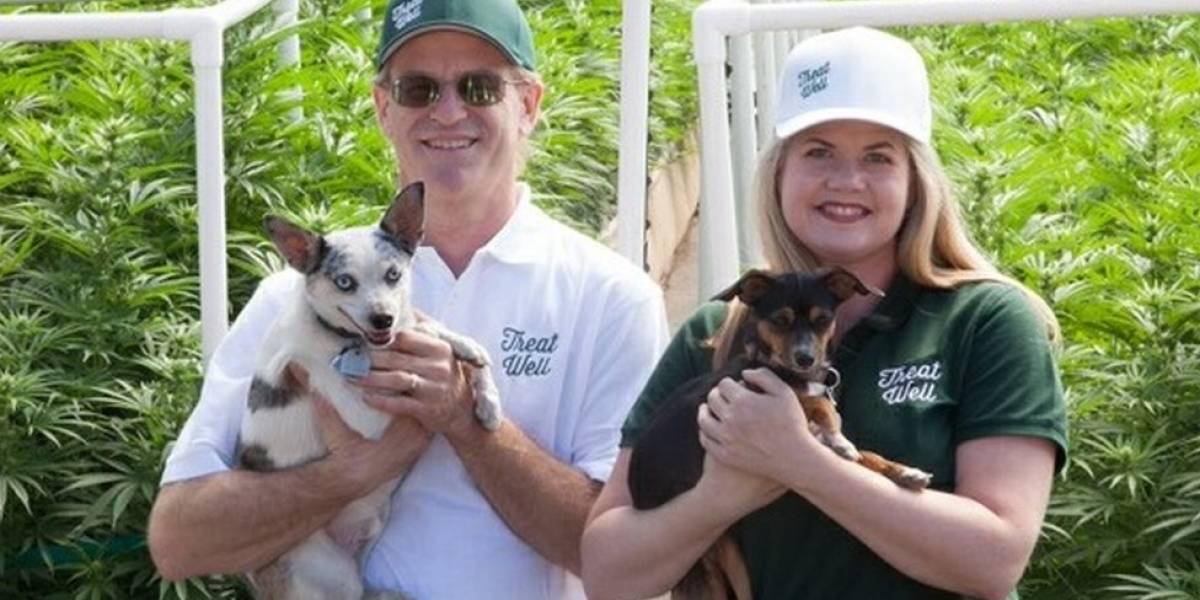O crescente mercado da cannabis medicinal para cachorros nos EUA