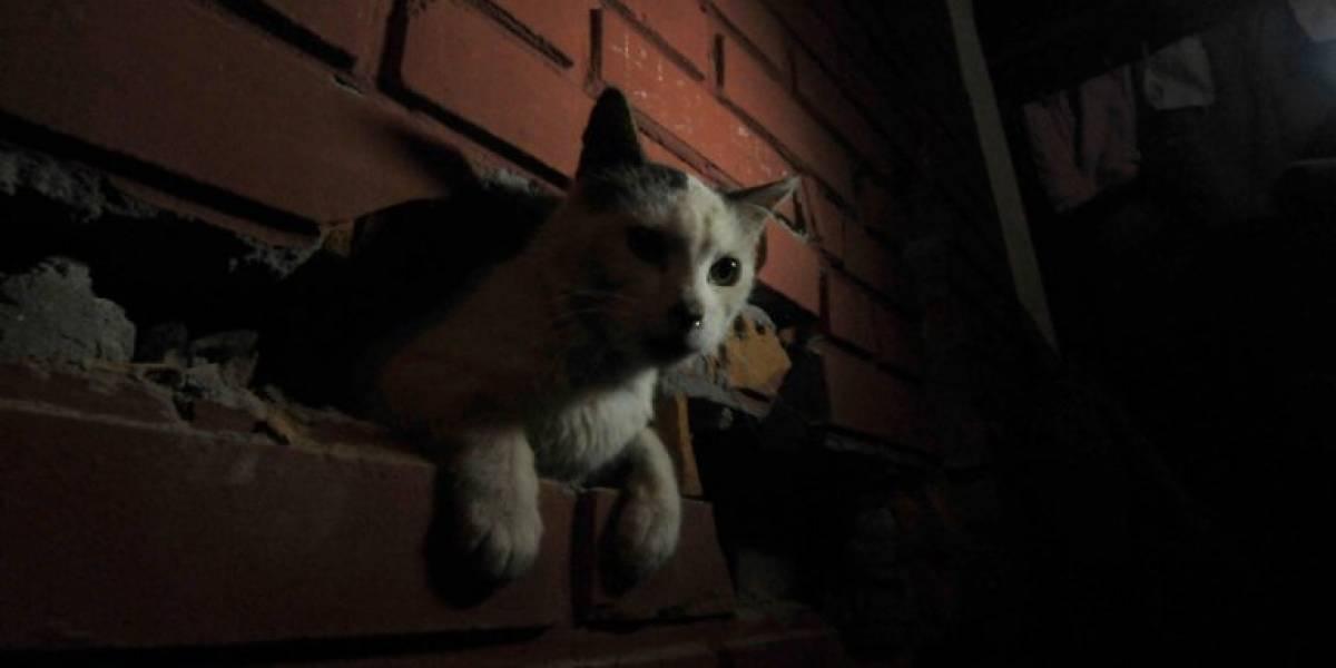 Alcalde Lavín se gana el amor de las redes luego que declararan admisible querella por gata preñada que murió apaleada en Las Condes