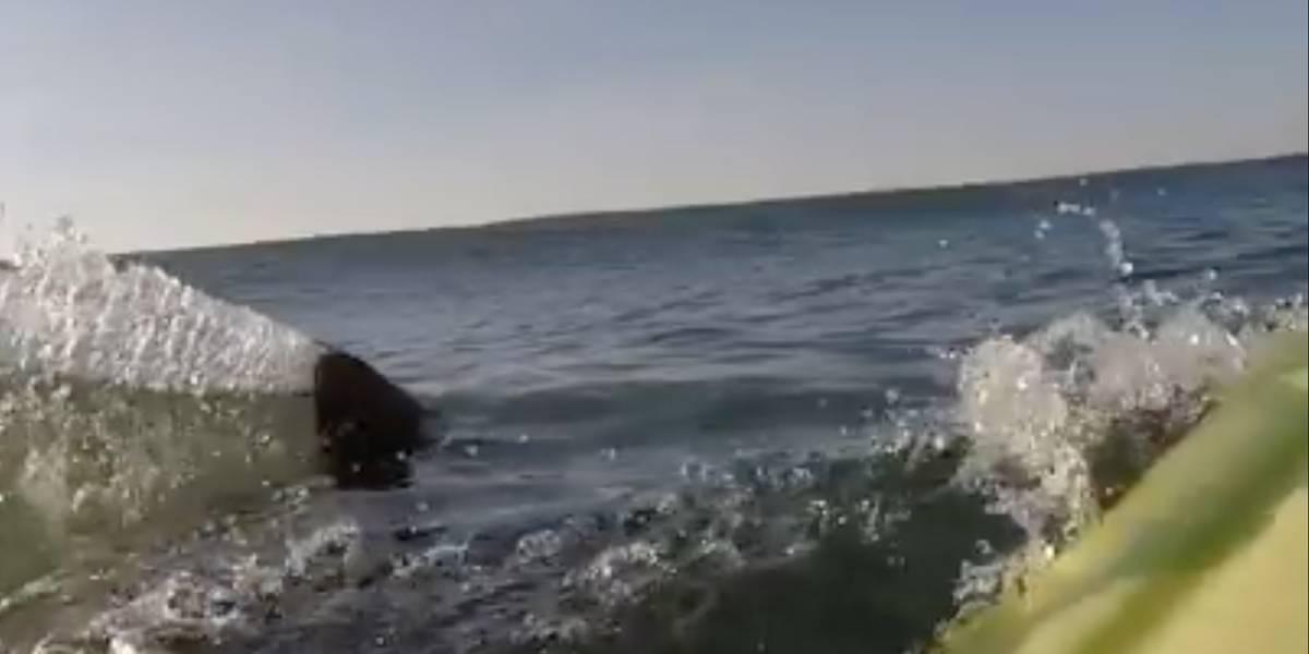 VÍDEO: Tubarão assusta surfista enquanto esperava por uma onda