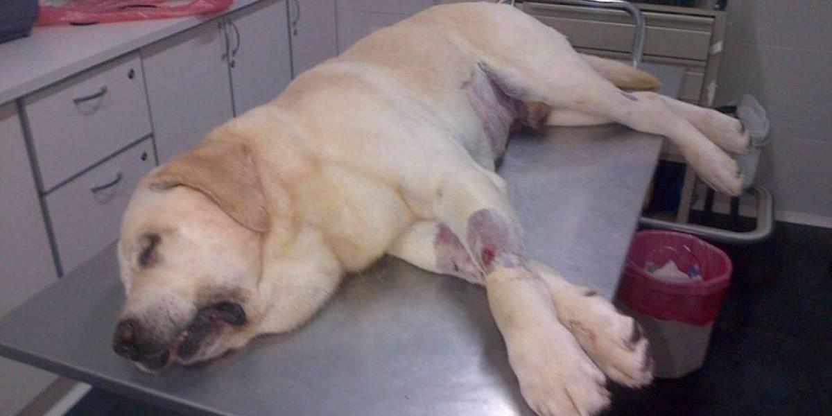 Facebook: denuncian muerte de mascota a causa de la pirotecnia de Navidad