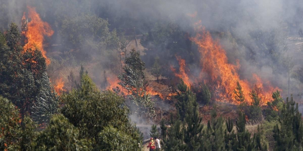 Van 1.520 incendios forestales desde julio, 23% menos que la temporada pasada