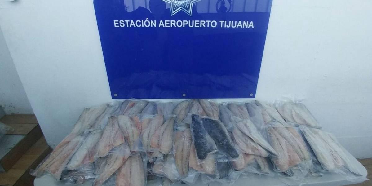 Profepa y PF aseguran 104 piezas de carne de totoaba en aeropuerto de Tijuana