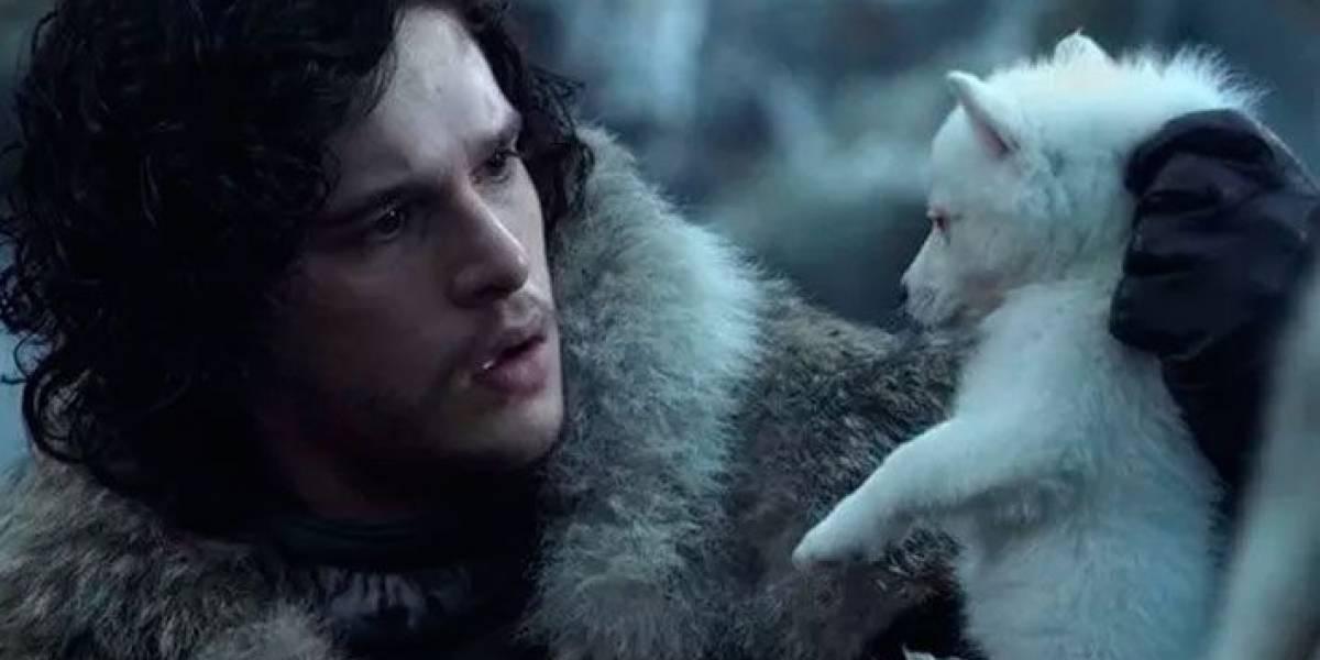 Abandono de cães aumentou depois de Game of Thrones