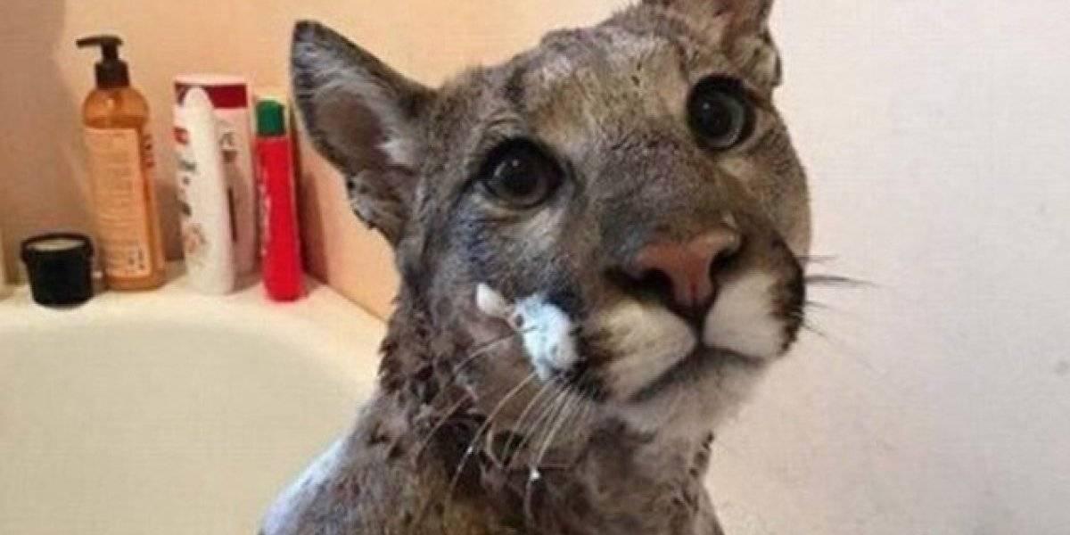 Mulher resgata animal na rua e leva susto quando descobre que não se tratava de um 'lindo gatinho'