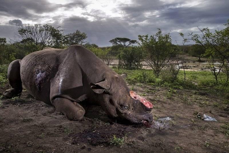 Fotógrafo de Vida Silvestre del Año. |Brent Stirton