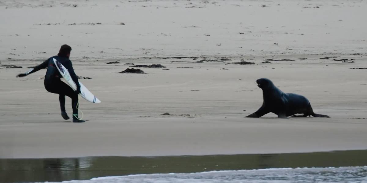 Leões marinhos botam surfistas para correr na Nova Zelândia