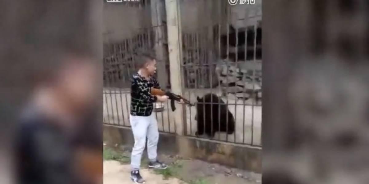 El fusilamiento de un oso tibetano con una AK-47 en un zoológico