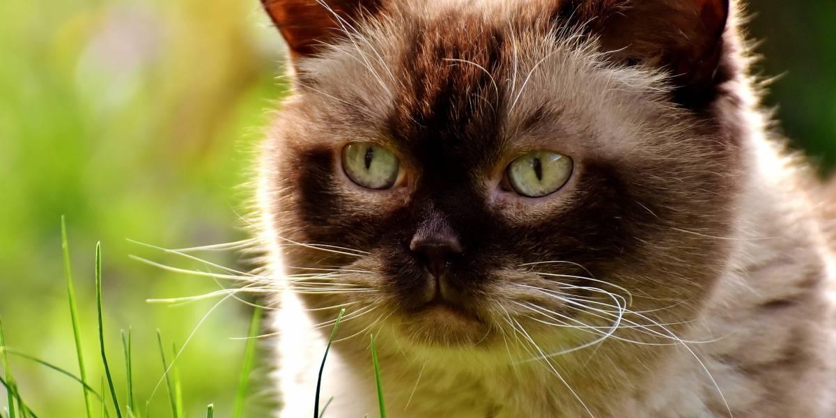 Policía británica busca a hombre que ha matado a más de 400 gatos