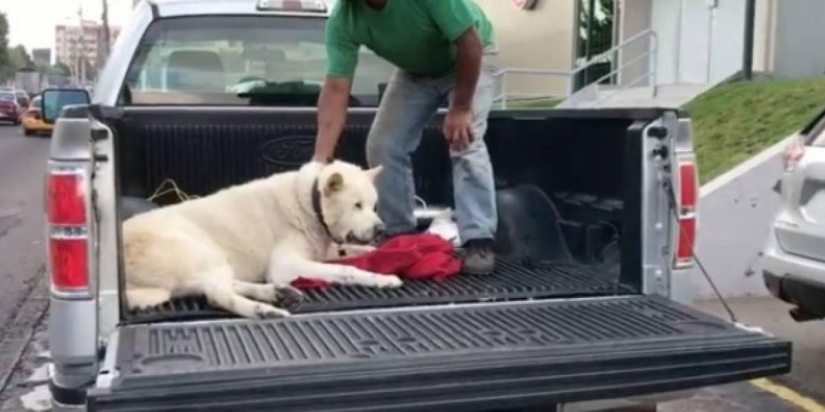 Dueña de perro envenenado no quería el despido de agente de tránsito