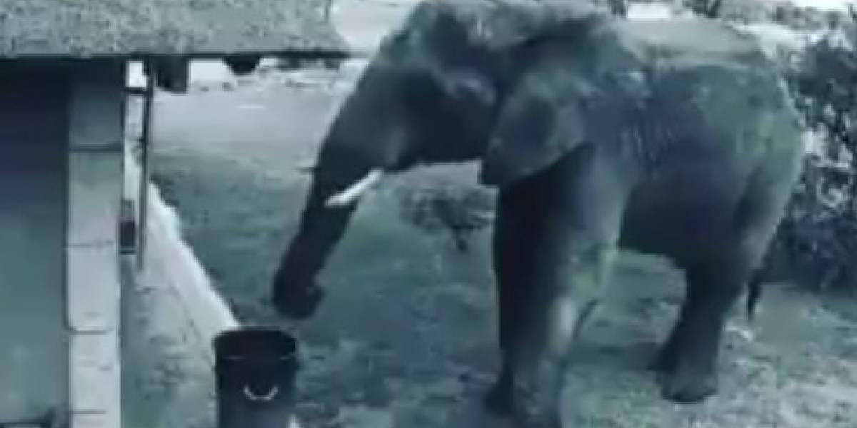 La acción de un elefante en Sudáfrica que se volvió viral porque da una lección a la humanidad