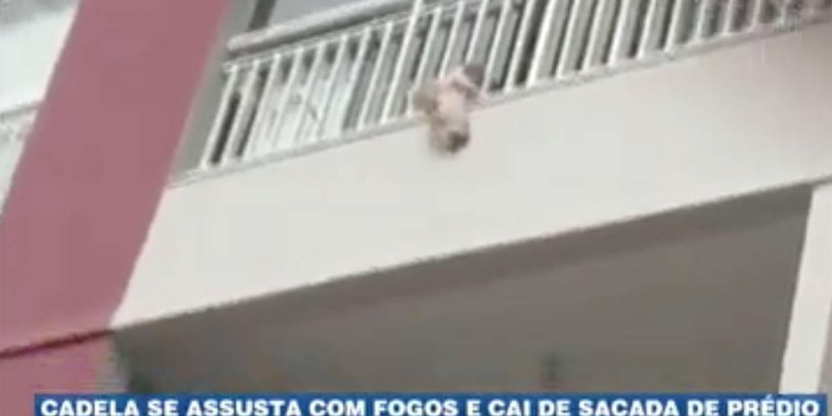 Cadela se assusta com fogos e cai da sacada de prédio