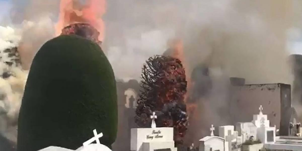 """Boric se ofrece de voluntario para reforestar cementerio de Punta Arenas y expresa su """"dolor"""" tras quema de cipreses"""