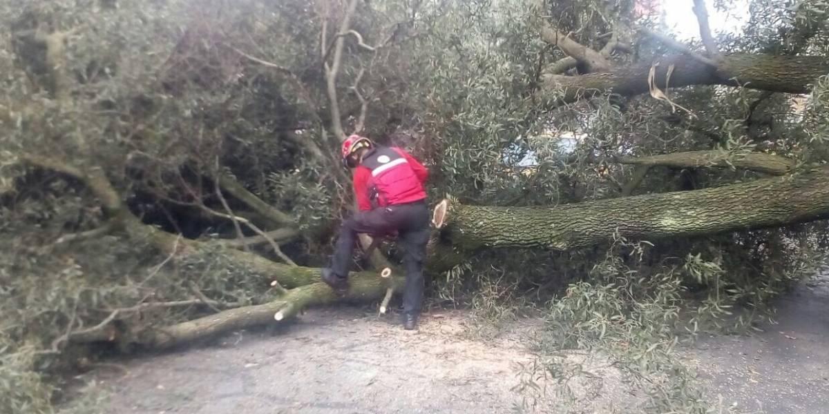 Se registró un árbol caído en La Carolina