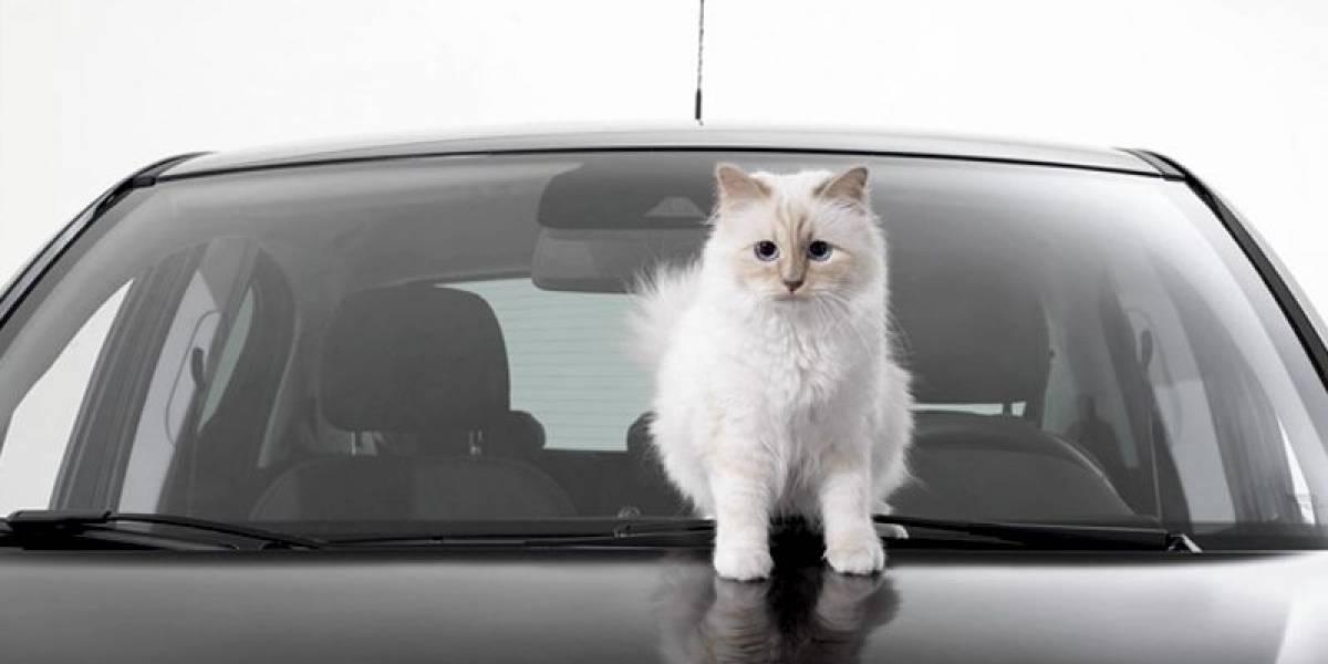 Tierna y millonaria: Choupette, la modelo felina que la rompe en redes sociales