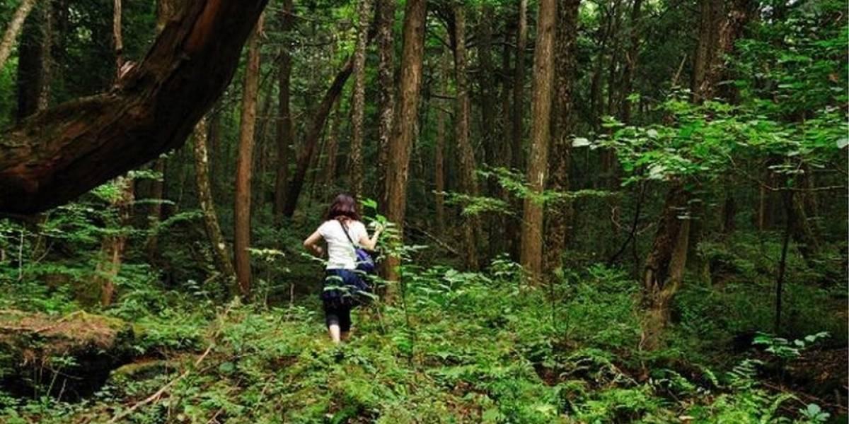 """Como é o Aokigahara, macabro """"bosque de suicídios"""" japonês no centro de uma polêmica no YouTube"""