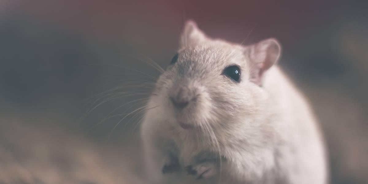 Aerolínea cancela vuelo por culpa de una 'rata viajera'