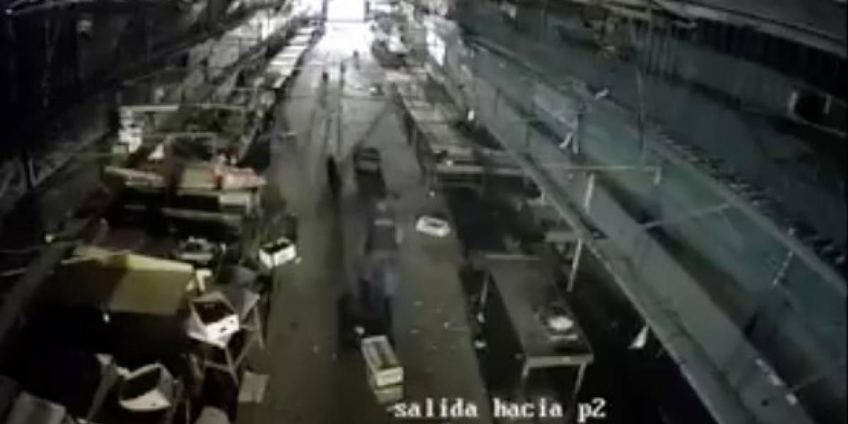 """""""Por gente así pierdo la fe en la humanidad"""": repudio total por guardia de mercado Lo Valledor que lanzó un gato a una jauría de perros"""