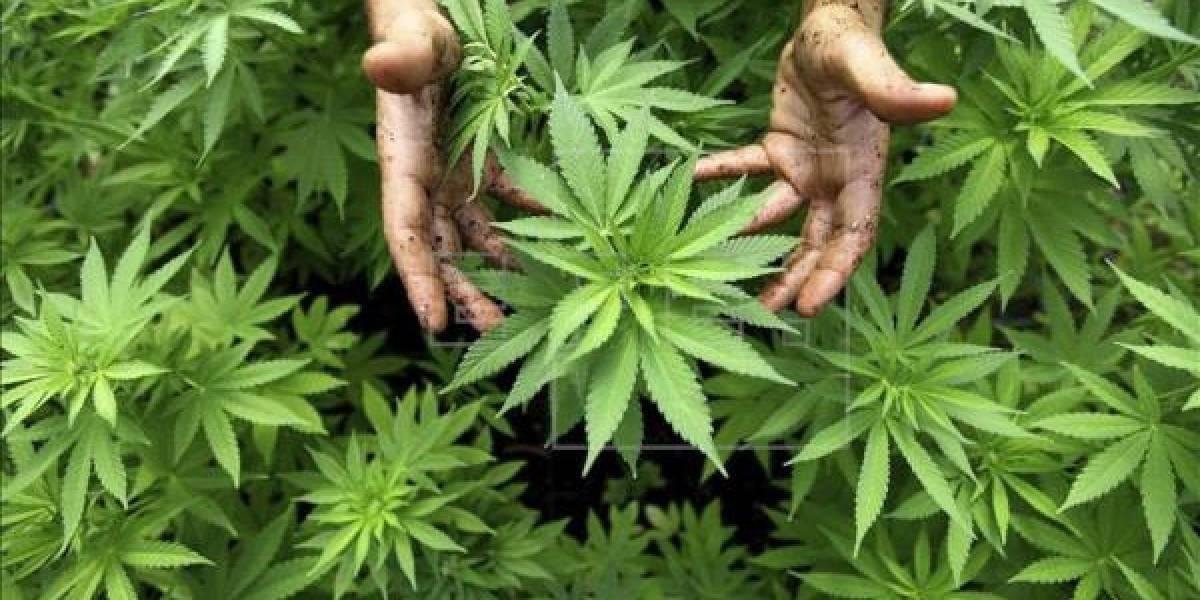 EEUU deroga política que facilita marihuana