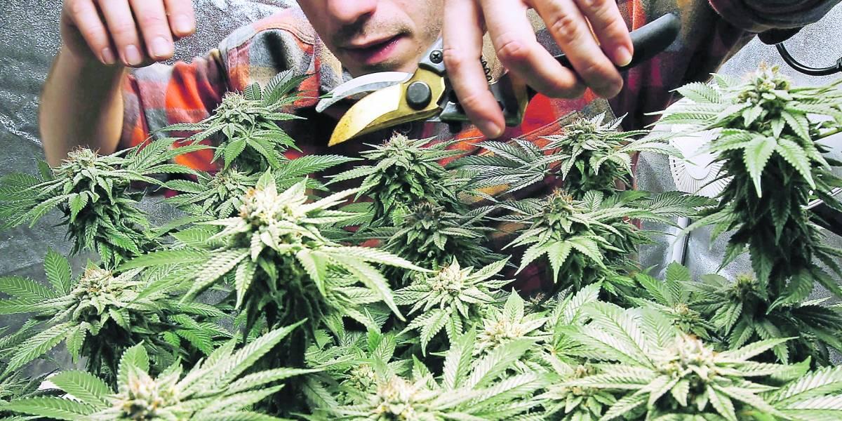 ¿Se acabarán las filas por marihuana en EE.UU.?