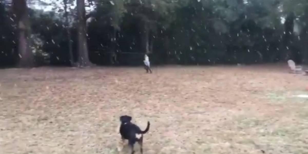 Vídeo de garoto e seu cão vendo neve pela 1ª vez viraliza