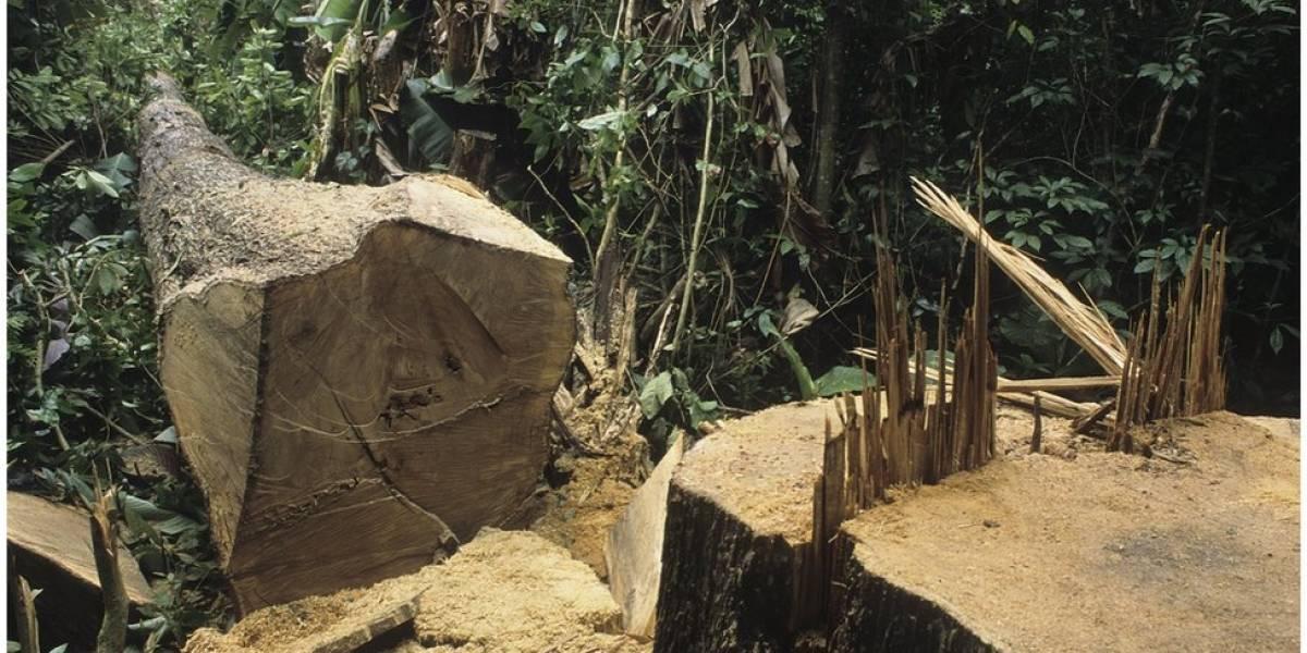 Desmatamento na Amazônia aumenta 60% em junho