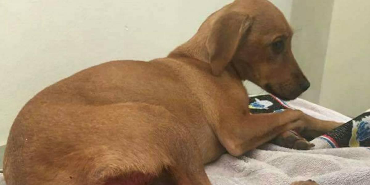 Colombia: Lupita, cachorra de 4 meses que fue violada