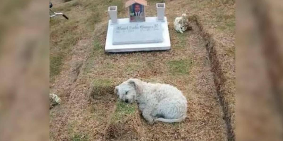 Un perro lleva 5 días al lado de la tumba de su amo, en Pasto