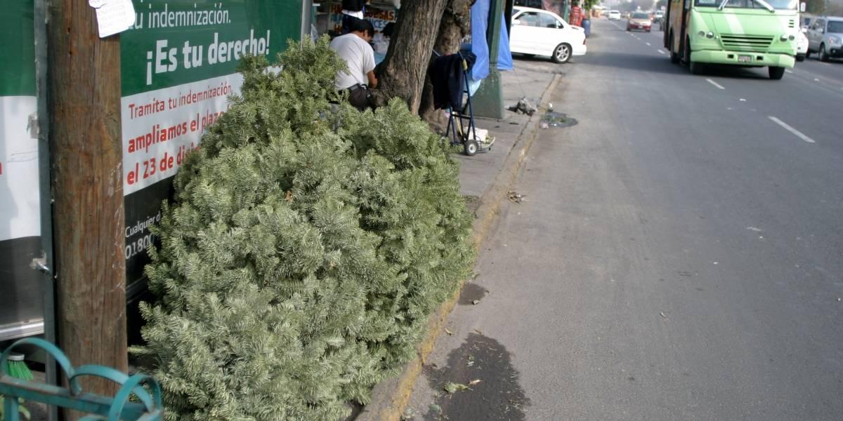 ¡No tires tu árbol de Navidad, mejor recíclalo!