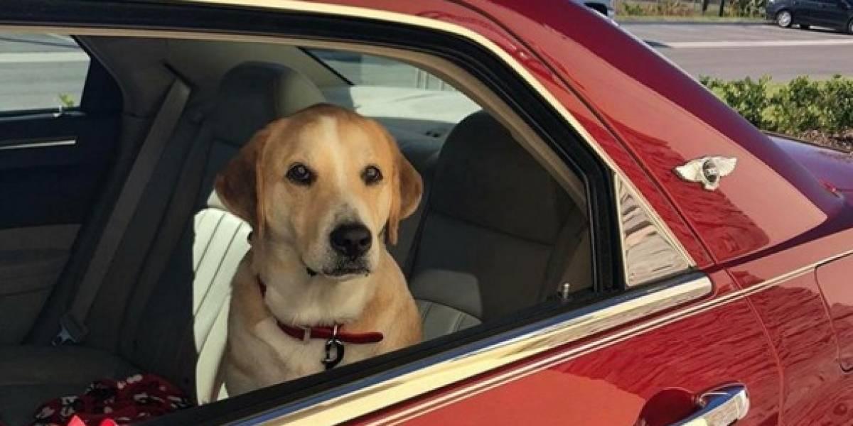 Funcionária de fast food tira foto de cãozinhos que passam pelo drive-thru