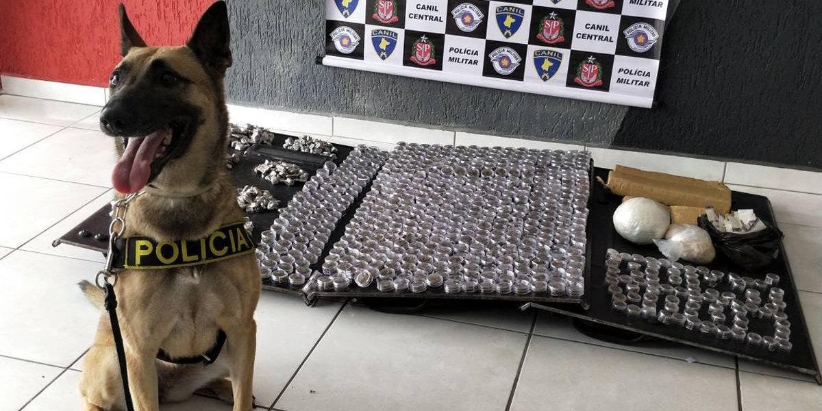Cão farejador ajuda Polícia Militar em apreensão de drogas na zona norte de São Paulo