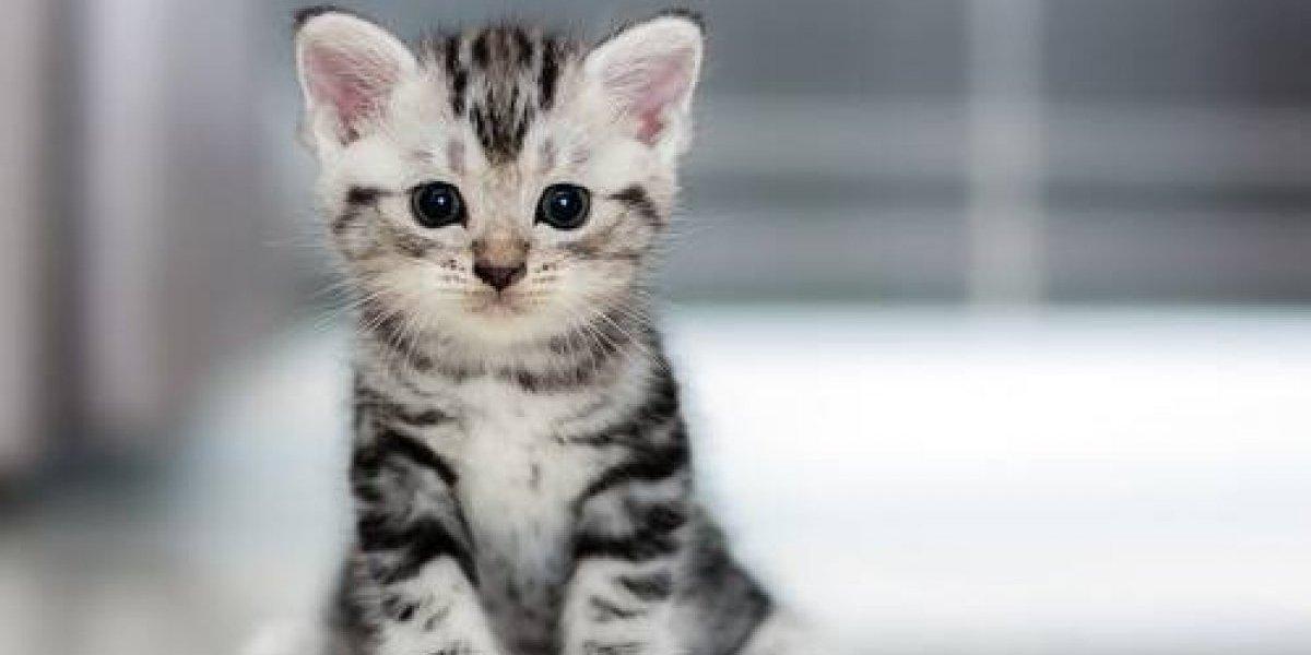El reto de encontrar al gato que tiene de cabeza a Twitter