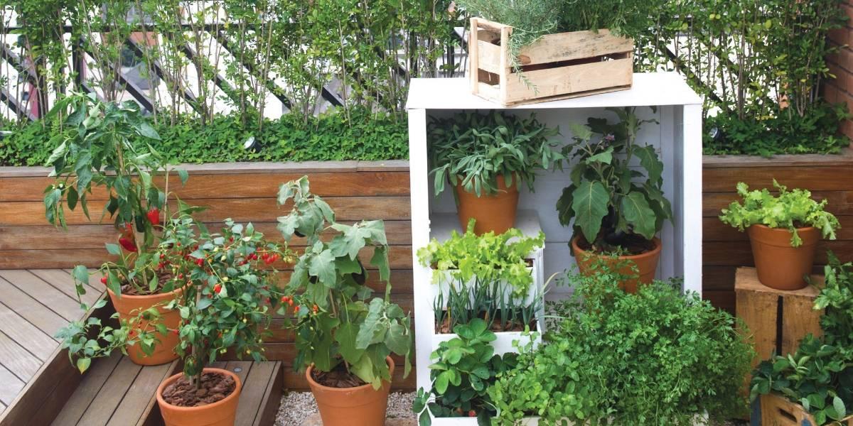 Como cuidar das plantas durante a viagem