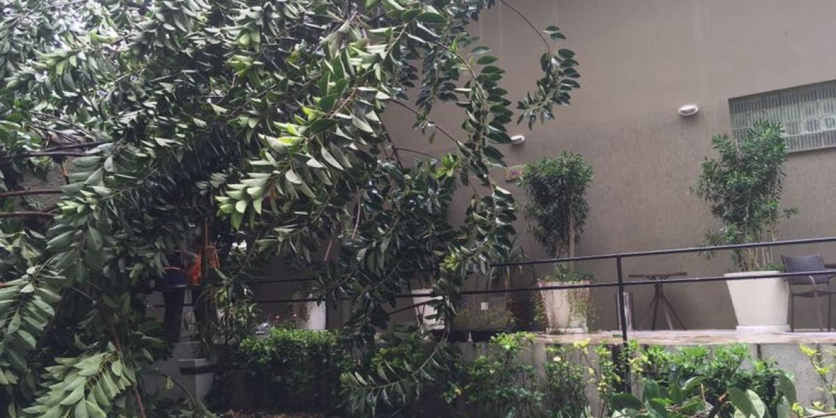 Mulher fica em estado grave após queda de árvore em SP
