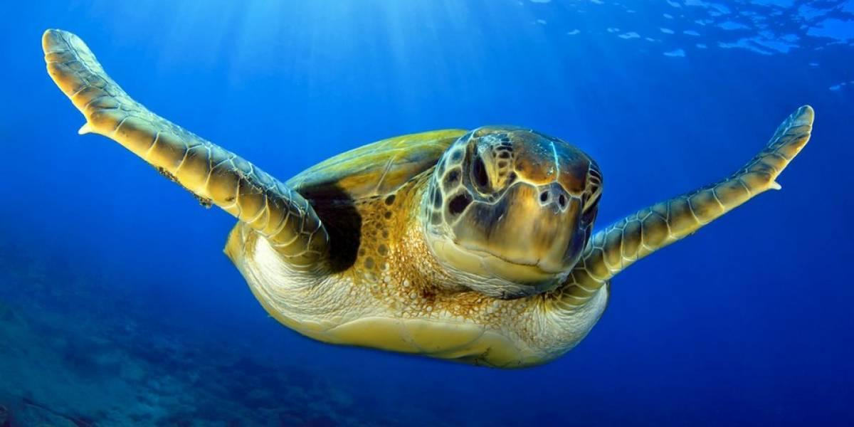 Llevan 20 tortugas marinas a zoológico de Florida tras paso de Dorian