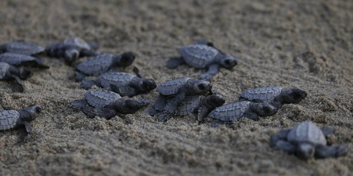 Ola de frío: organización ambientalista de Florida recibe 850 tortugas aturdidas por el frío