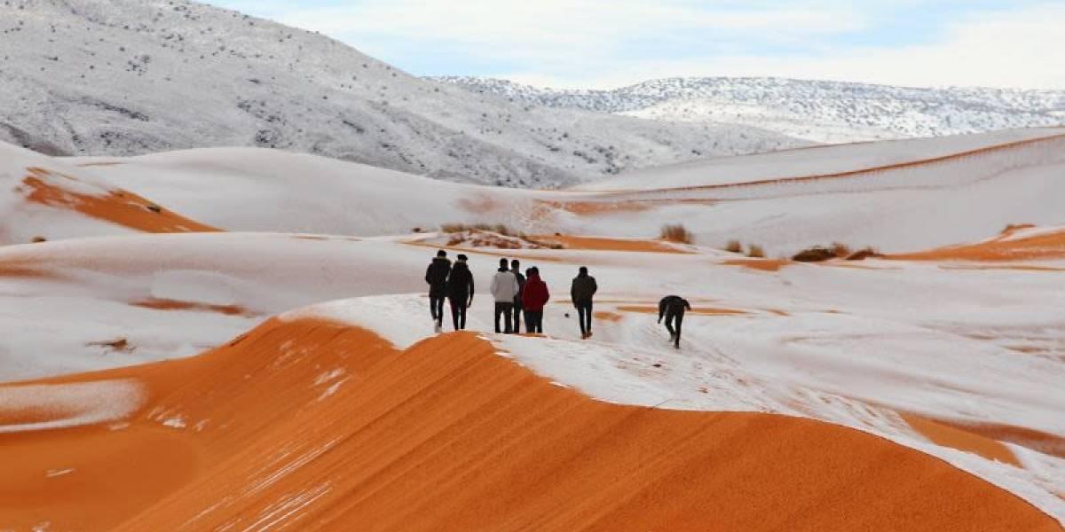 ¿Los efectos del cambio climático?: El desierto del Sahara nevado, tiburones, iguanas y tortugas se congelan