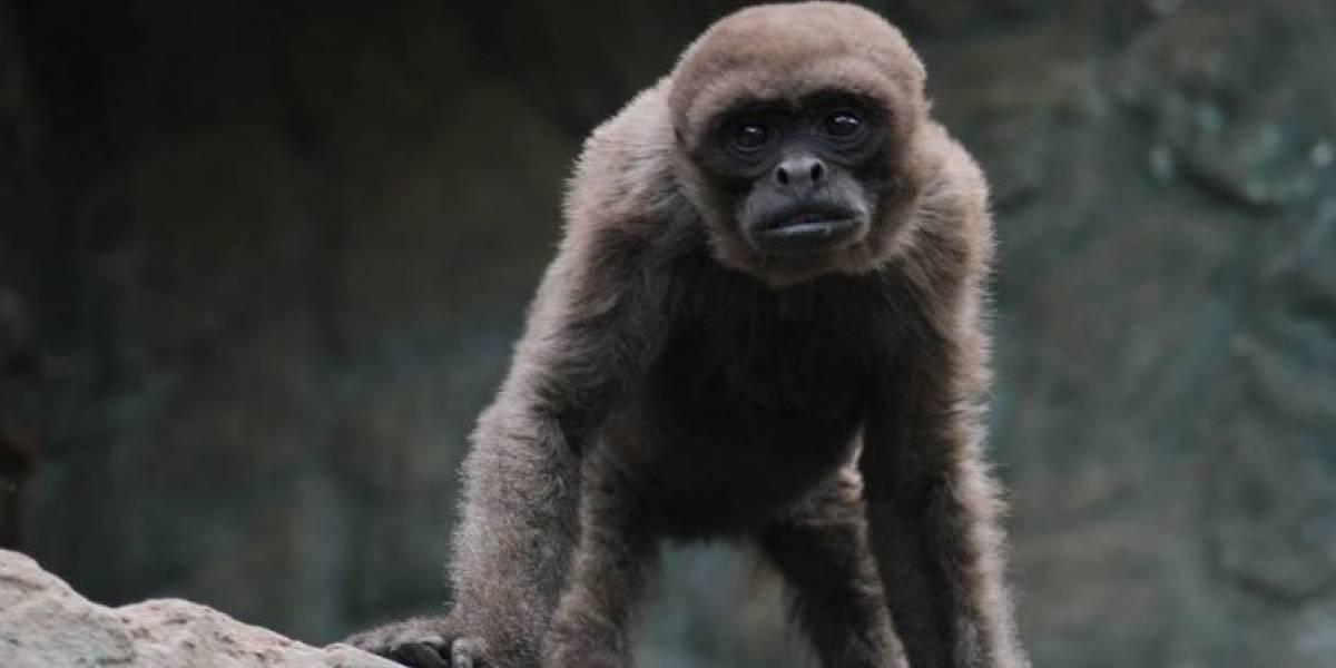 Zoológico de Quito liberó 89 animales rescatados