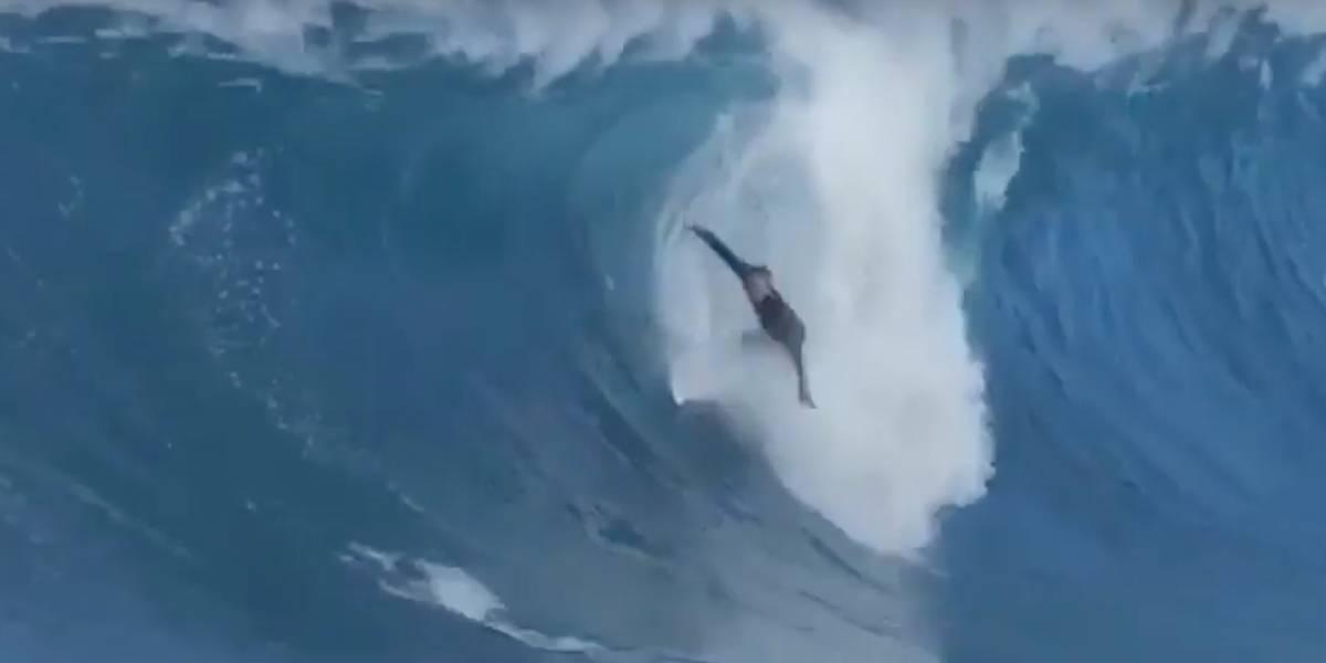 Brasileiro salva surfista de elite após tombo no Havaí