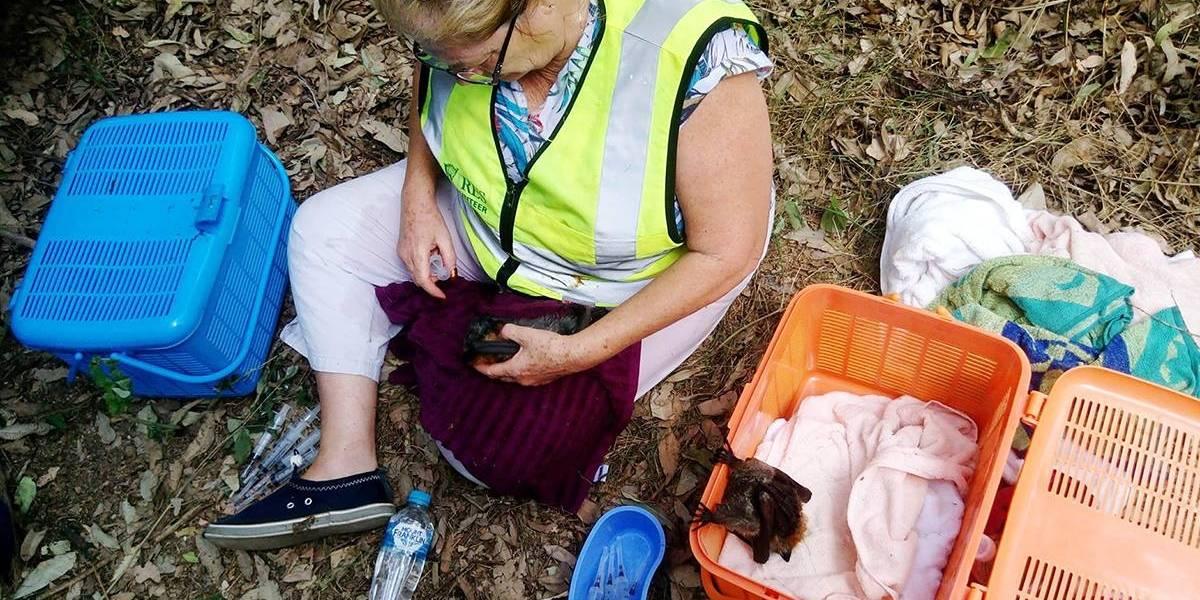 En Australia mueren murciélagos con el cerebro hervido a causa del calor