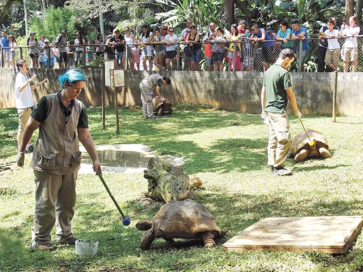 Recinto do jabuti-gigante no Zoológico de São Paulo | paulo gil/zoológico de são paulo