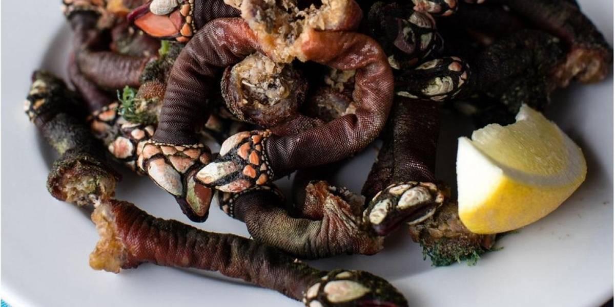 Dedos de Lúcifer, a rara (e cara) iguaria portuguesa que homens arriscam a vida para colher