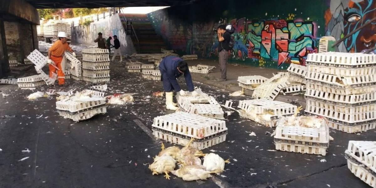 Impactantes imágenes: camión que transportaba gallinas colisiona con paso bajo nivel en San Bernardo