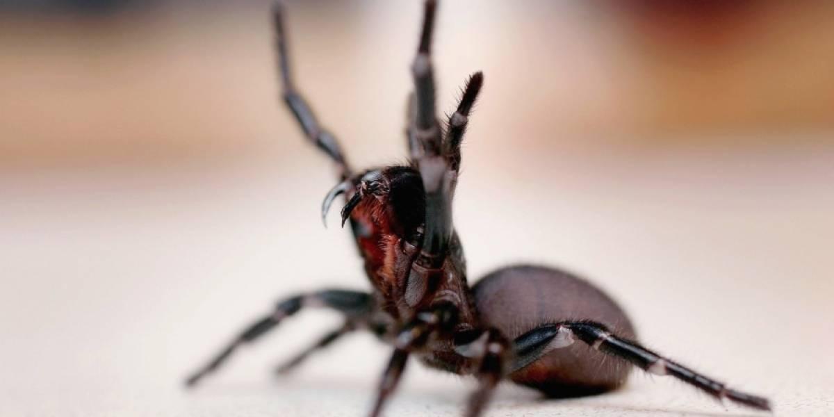 Intenta matar una araña y termina incendiando su apartamento