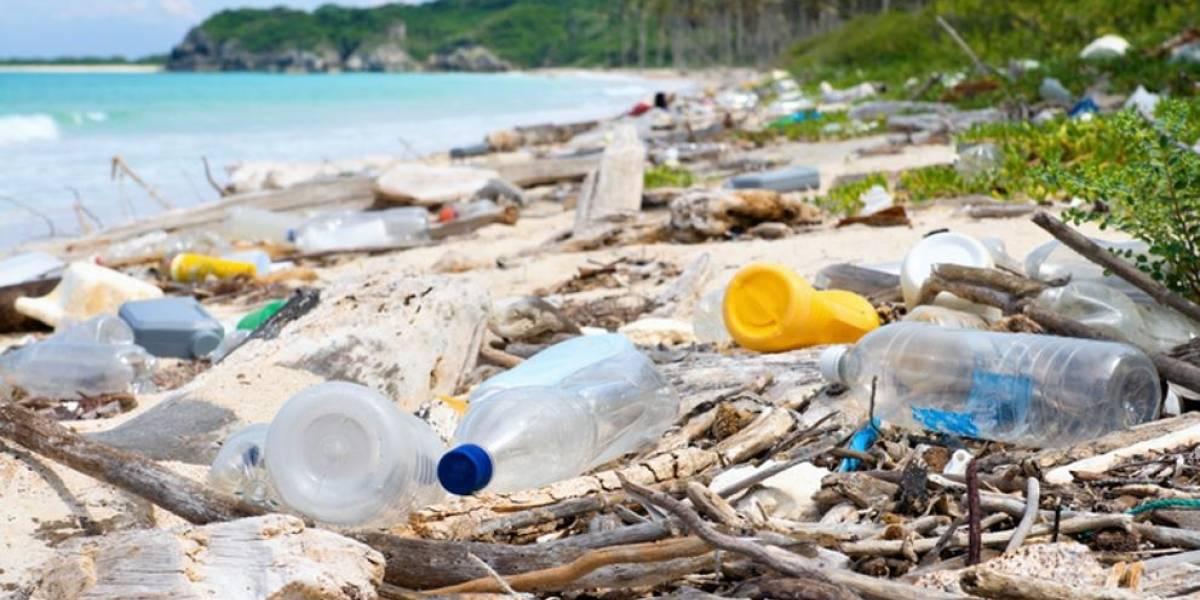 Cuáles son los artículos que tenemos en casa que están destruyendo el medio ambiente
