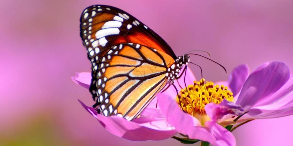 Fósseis mostram que as borboletas são bem mais antigas do que se pensava